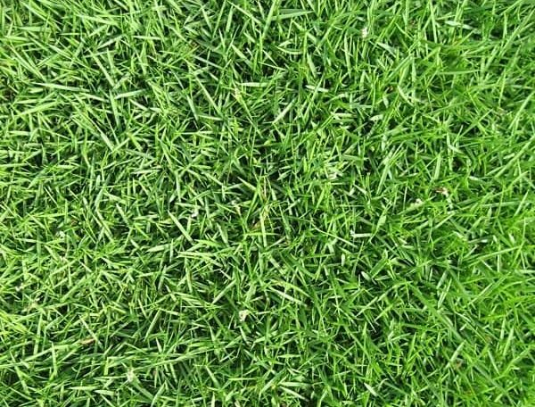 What Is The Best Zoysia Grass Seed? Reviews & Buyers Guide