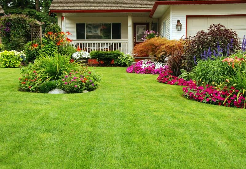 Lawn Fertilizer Buyers Guide