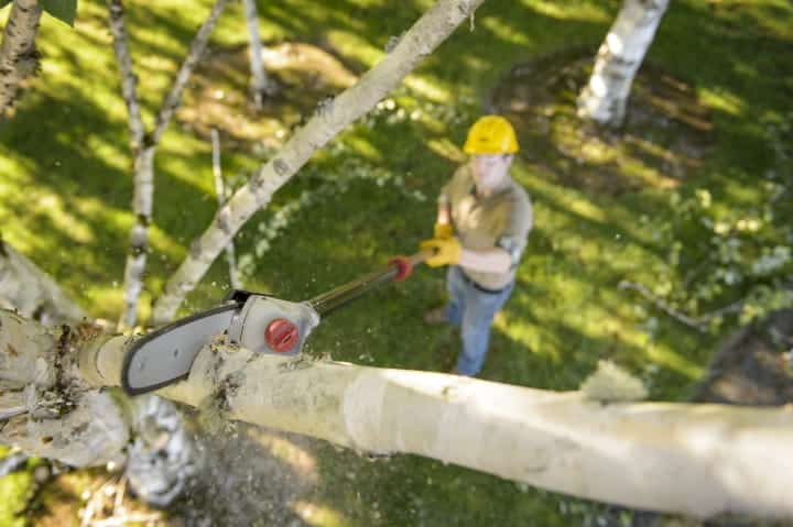 Buying The Best Pole Saw