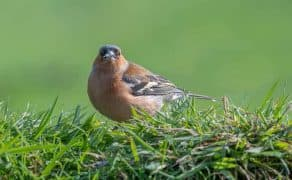 Keeping Birds From Eating Grass Seed