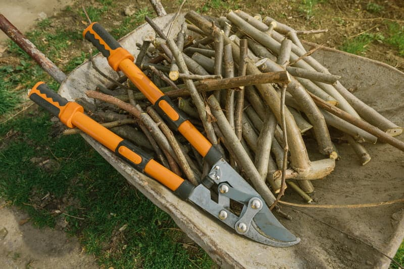 Best Loppers for Pruning & More