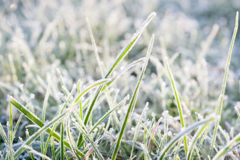 Can Grass Seed Freeze?