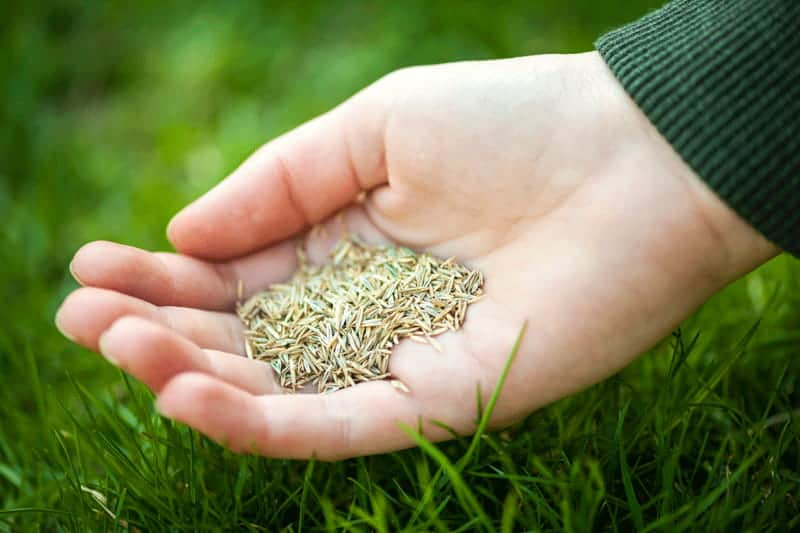 How Long Can Grass Seed Be Stored