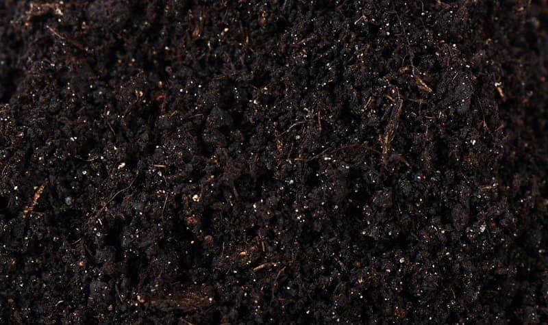 Black Compost