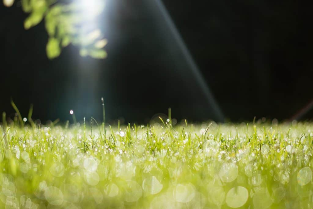 Tips to Ensure Healthy Grass Growth