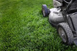 How Long After Spraying Weeds Can I Mow?