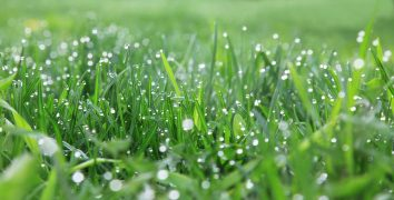 Why Does Dew Form on Grass Overnight?