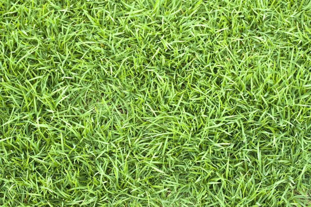 Why is My Bermuda Grass Turning Brown (Or Yellow)?