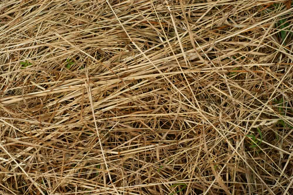 How Long Do You Leave Hay On New Grass Seed