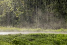 How Long Should Fertilizer Be Down Before It Rains?