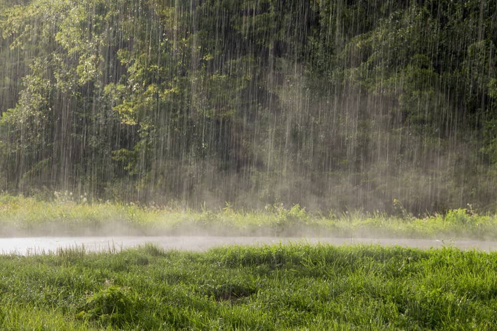 How Long Should Fertilizer Be Down Before It Rains