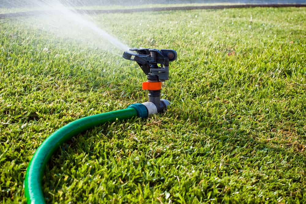 Is It Better To Water Grass Seed In The Morning Or At Night