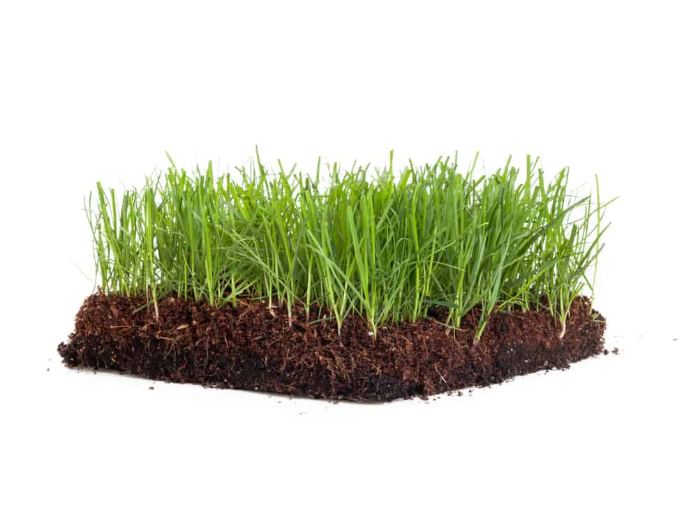 Sta Green Vs Scotts Fertilizer Ratings - Which Is Best
