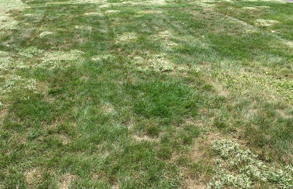 Should I Bag My Grass Clippings If I Have Weeds