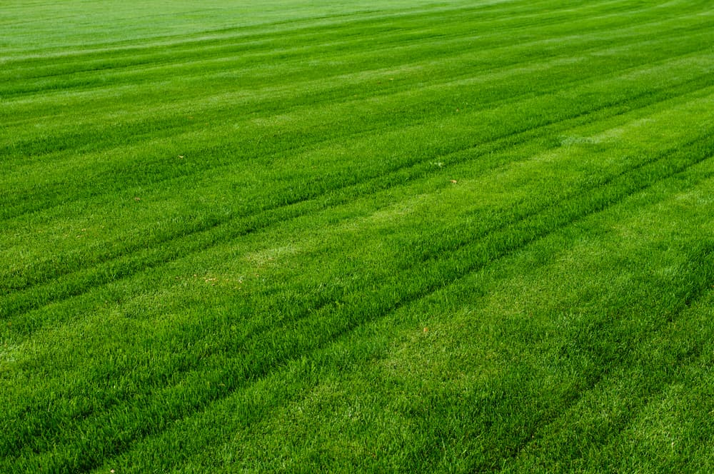Why Does My Lawn Mower Leave Lines
