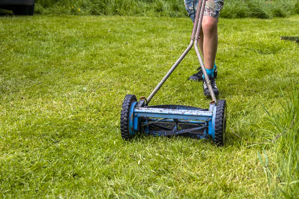Can You Cut Wet Grass With A Reel Mower?