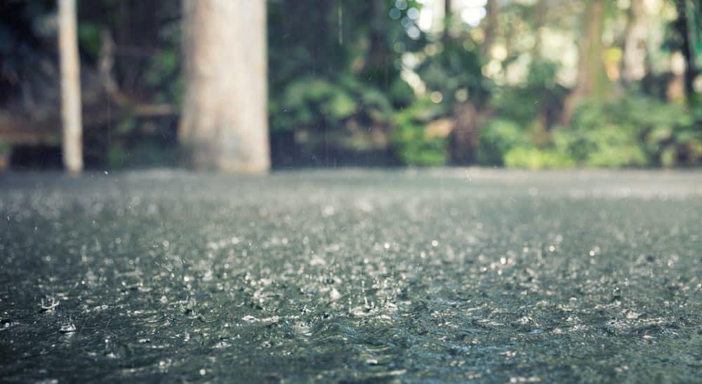 Should You Fertilize Your Lawn Before It Rains