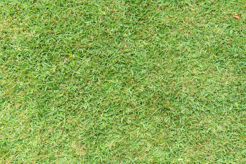 What Causes St. Augustine Grass To Turn Yellow