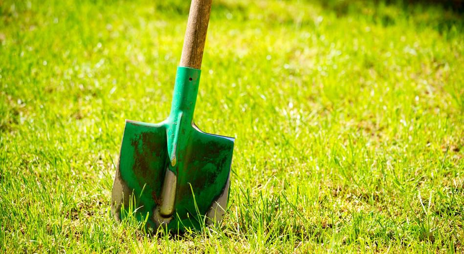 Dig Up Lawn