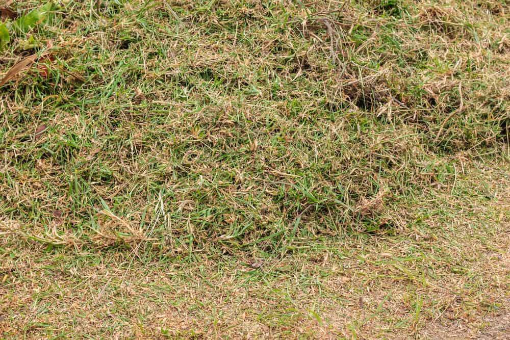 Grass clippings on the lawn