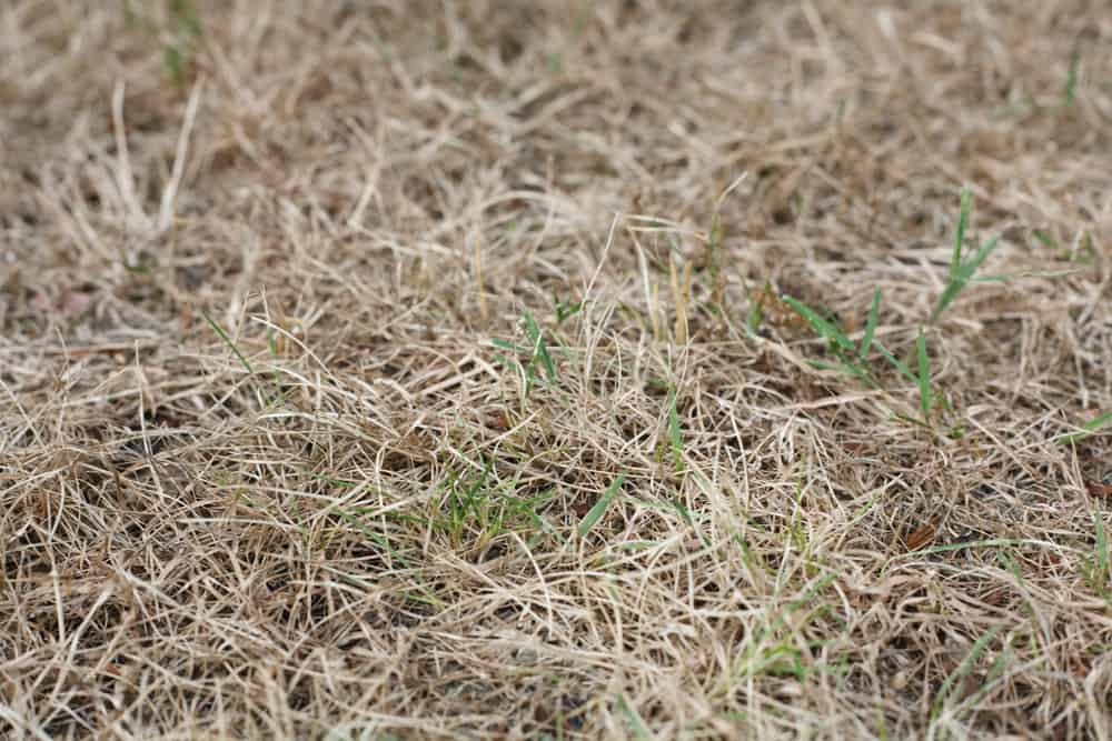 Killing A Lawn And Starting Over Total Restoration