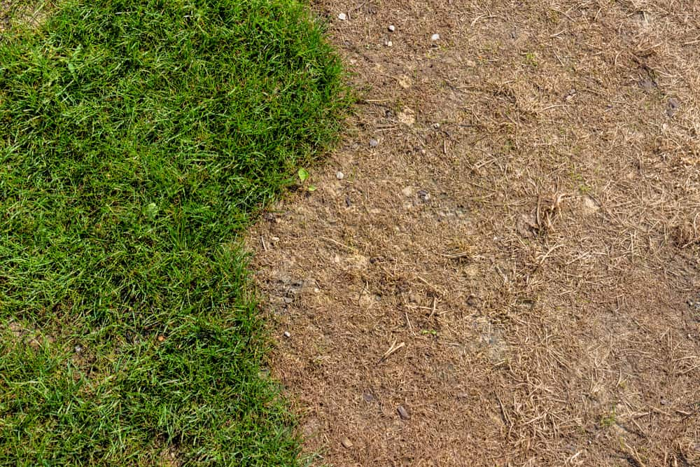 What is Lawn Renovation