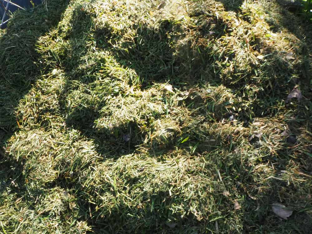 Will Grass Clipping Turn Into Dirt