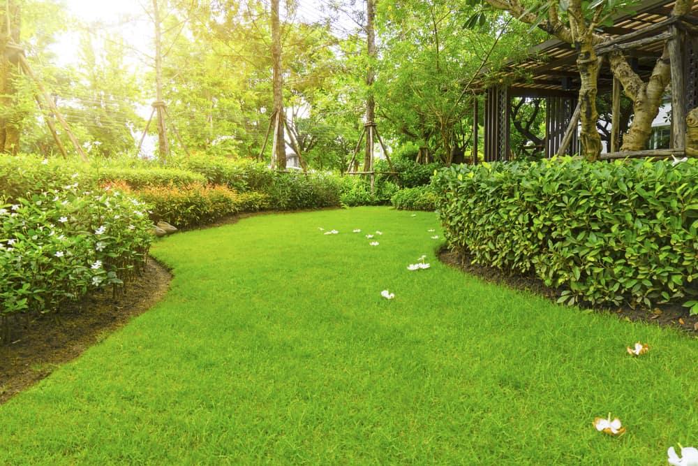 How Fast Does Zoysia Grass Spread