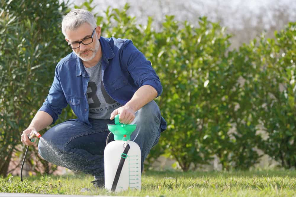 When To Spray Lawn For Weeds Yearly Timing