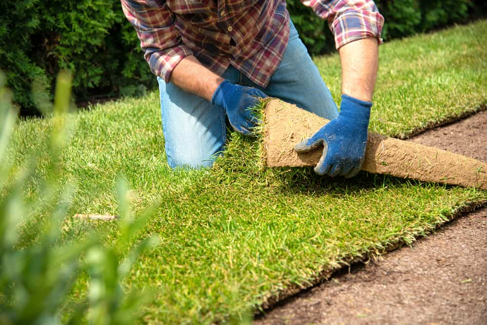 How To Establish Sod Once Installed