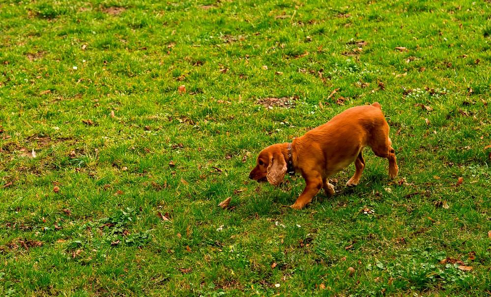 What Is The Best Grass To Grow With Dogs