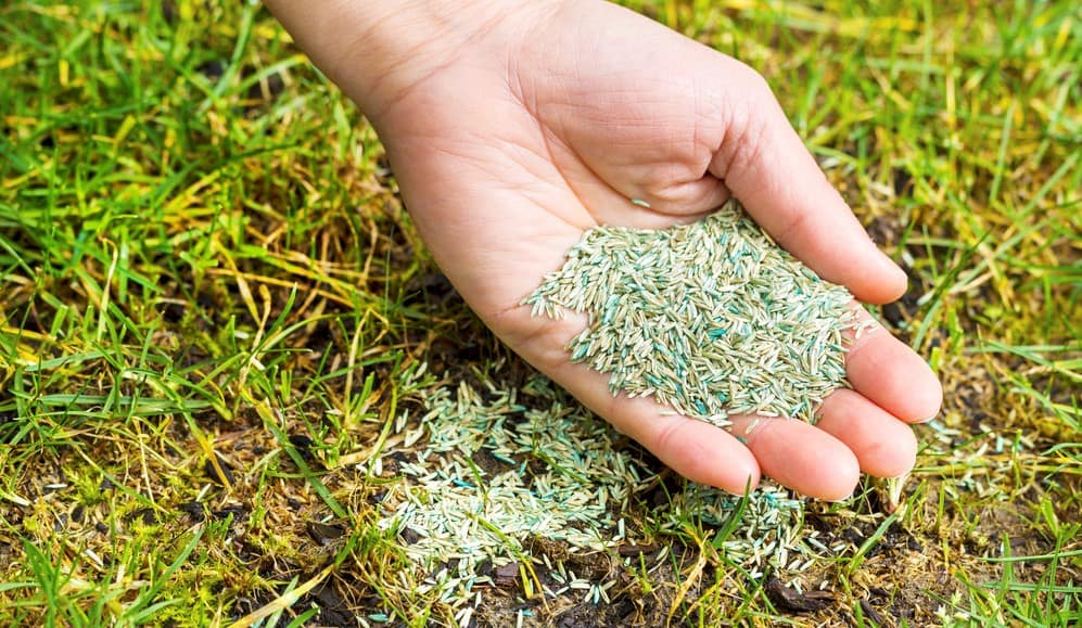 What is The Best Fertilizer to Use On New Grass Seed