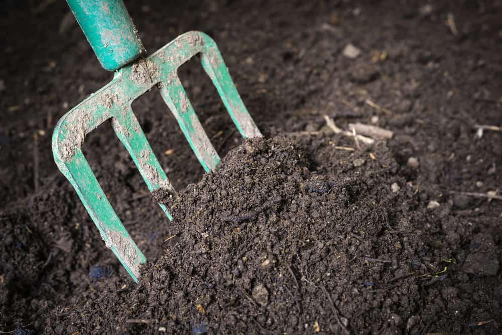 Compost Vs. Topsoil
