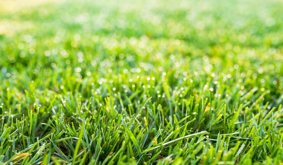 How Long Does It Take Fescue Grass Seed To Germinate