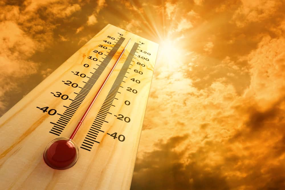 Is Tall Fescue Heat Tolerant