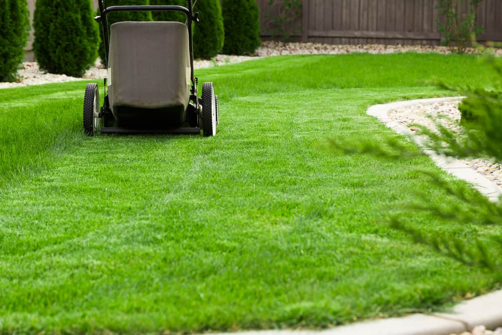 Mowing Tall Fescue