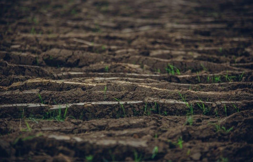 Preparing The Soil For Fescue Grass Seeds