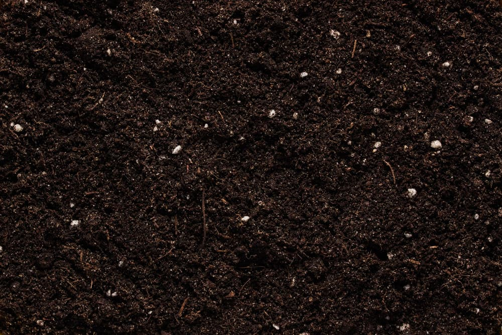 Should I Apply A Fertilizer Along With Compost