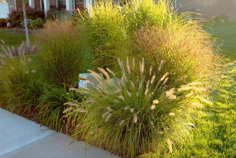 Types Of Ornamental Grass